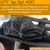 homeless jesus statue in orlando wtf fun facts
