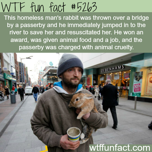 Homeless man jumps into a river to save his rabbit - WTF fun facts