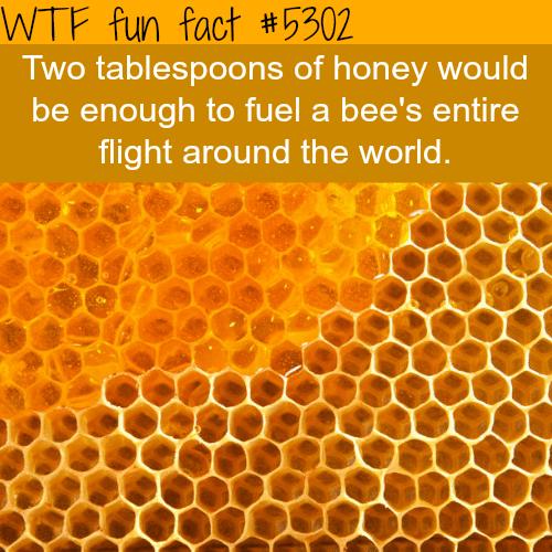 Honey - WTF fun facts