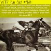 horse jockey died mid race wtf fun fact