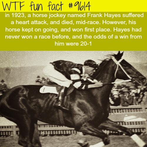 Horse jockey died mid-race - WTF fun fact