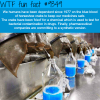 horseshoe crabs blood wtf fun facts