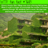 houtou wan village in china wtf fun fact