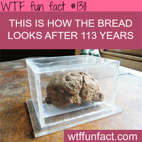 how bread looks after more than 100 year