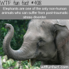 how elephants and humans are very alike wtf fun