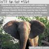 how elephants are fighting poachers