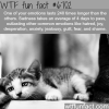 how long emotions can last wtf fun fact