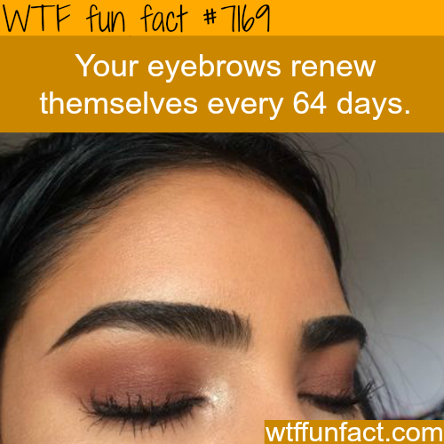 How long it takes for your eyebrows to grow - WTF Fun Fact