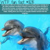 how male dolphins try to impress females wtf fun