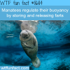 how manatees regulate their buoyancy wtf fun
