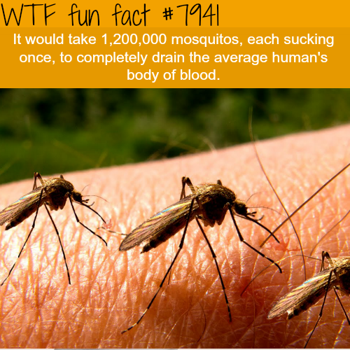 How many mosquitos it would take to drain a human - WTF fun facts