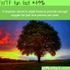 how many trees are needed to provide oxygen for