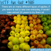 how many types of apples are there wtf fun