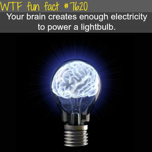 How much electricity in your brain - WTF fun facts