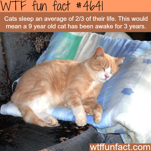 How much of their life do cats spend sleeping - WTF fun facts