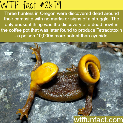 How poisonous is the Newt? -WTF funfacts