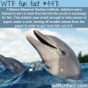 how smart are dolphins