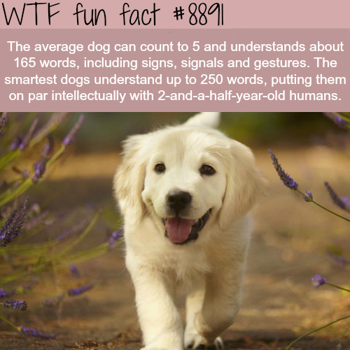 How smart is the average dog - WTF fun facts