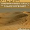 how the desert fertilizes the rainforest