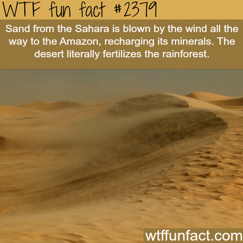 How the desert fertilizes the rainforest - WTF fun facts