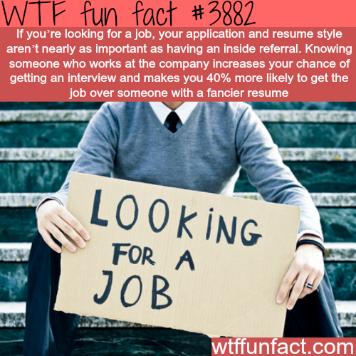 How to get interviewed and find a job - WTF fun facts