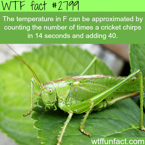 How to get the temperature in F -WTF fun facts
