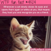 how to know if a cat likes you wtf fun facts