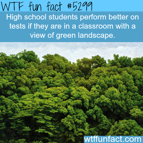 How to make school student's to perform better - WTF fun facts