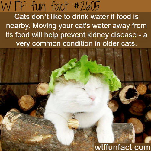 How to make your cat drink water -WTF funfacts