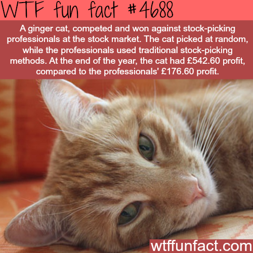 How to pick stocks - WTF fun facts