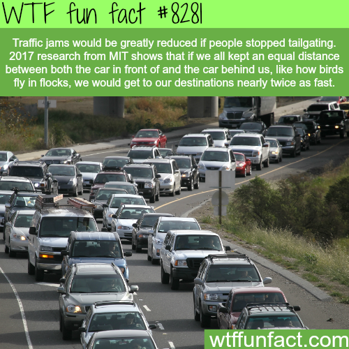 How to reduce traffic jams - WTF fun facts