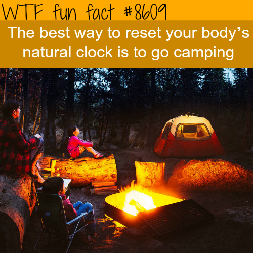 How to reset your natural clock - WTF fun facts