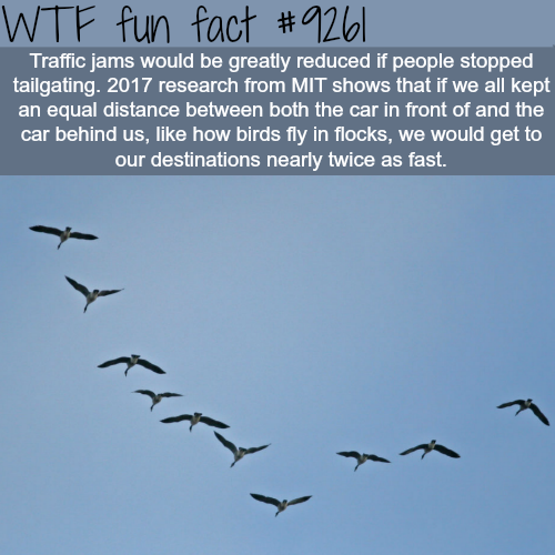 How to solve traffic jams - WTF fun fact