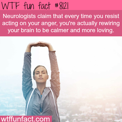 How to wire your brain to be calmer - WTF fun facts