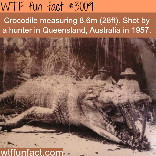 Huge 8 meter Crocodile shot in Australia -WTF fun facts
