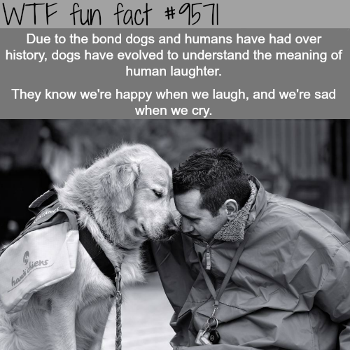 Human and dog bond - WTF fun fact