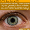 human eyes facts