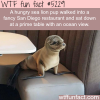 hungry sea lion walks into a fancy restaurant