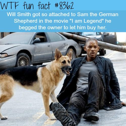 I am Legend - WTF fun facts