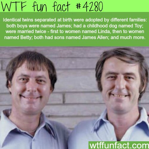 Identical twins facts -  WTF fun facts