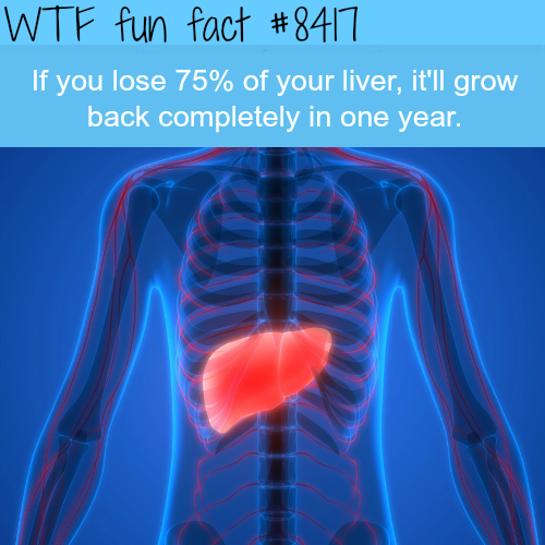 If you lose your 75% of your liver it would grow back- WTF fun facts