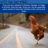 if you own any chickens in quitman georgia its