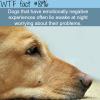 if your dog wont sleep at night wtf fun fact