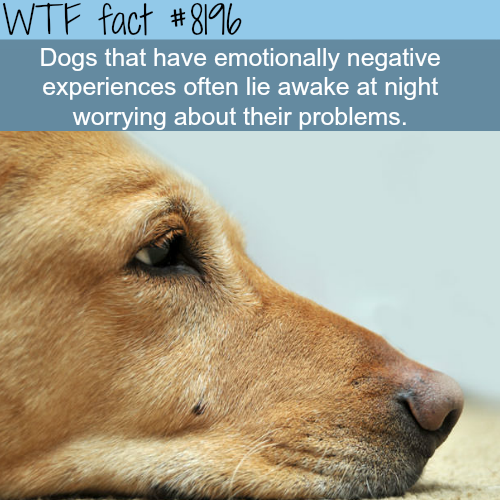 If your dog won't sleep at night - WTF fun fact