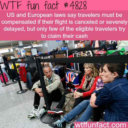 If your flight is severely delayed or canceled