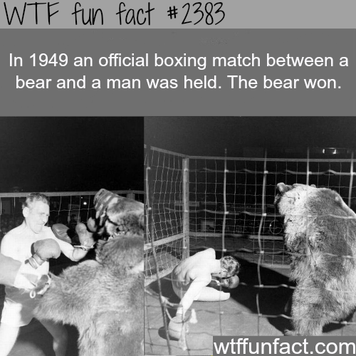 In 1949 an official boxing match - WTF fun facts