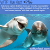 india and dolphins wtf fun facts