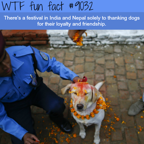 Indian festival for dog appreciation - WTF fun facts