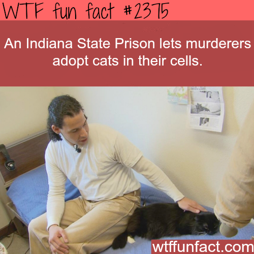 Indian state prison let prisoners adopt a cat -WTF funfacts