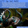 inky the octopus wtf fun facts